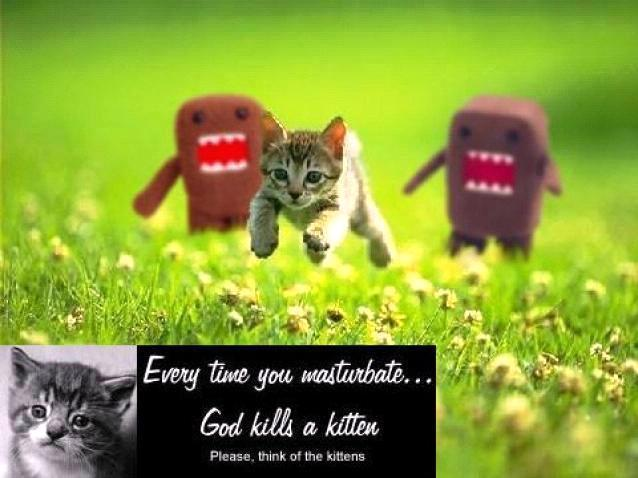Think of the kittens...